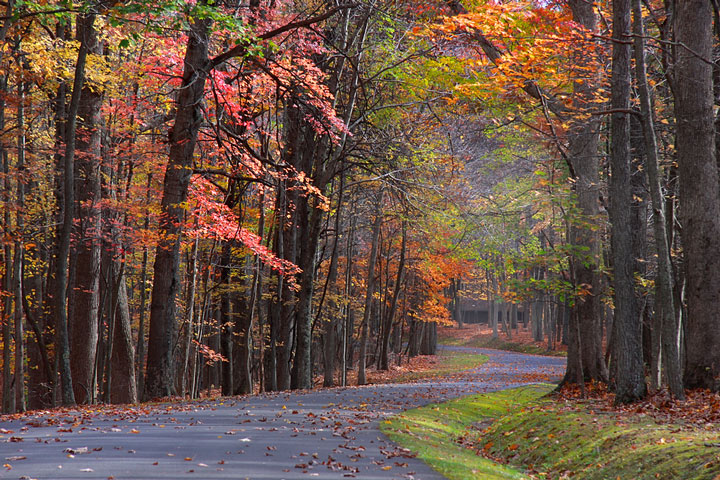 colorful trees along a West Virginia road